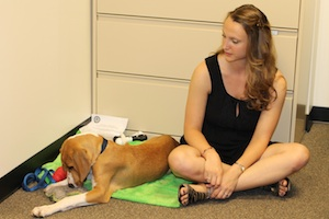 """Devin and Copper enjoying """"Bring your dog to lab meeting"""" day"""